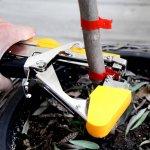 Садовый степлер как инструмент для подвязки винограда, помидор и других растений
